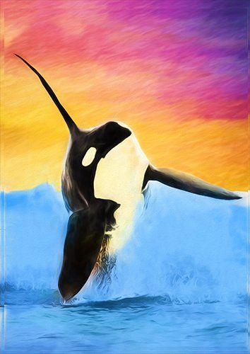 Orca whale art animal, Black colour - From £17.50 | Metal Plate Pictures