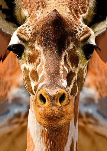Animal giraffe face, Black colour - From £17.50 | Metal Plate Pictures