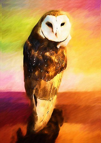 Barn owl, Black colour - From £17.50 | Metal Plate Pictures