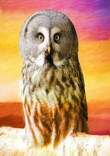 Great grey owl art, Black colour - From £17.50 | Metal Plate Pictures