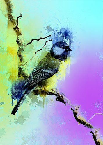 Great tit art bird, Black colour - From £17.50 | Metal Plate Pictures