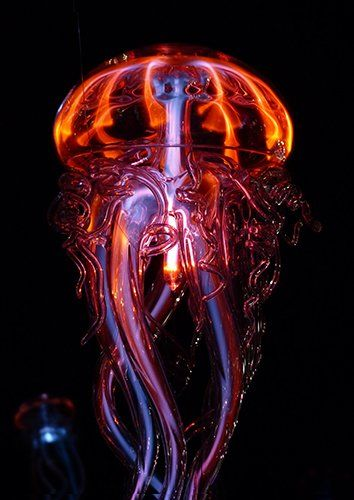 Jellyfish close up colourfull, Black colour - From £17.50 | Metal Plate Pictures