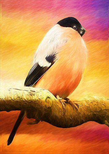 Bullfinch bird art animal, Black colour - From £17.50 | Metal Plate Pictures