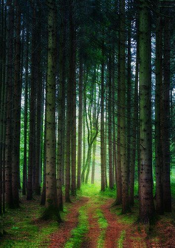 Into the tall forest trees, Black colour - From £17.50 | Metal Plate Pictures