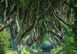 Ireland wild trees