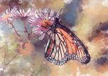 Butterfly wat