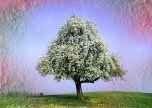 Springtime tree wat
