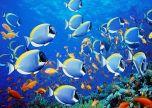 Animal marine fish