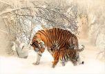 Animal tiger walking through the snow