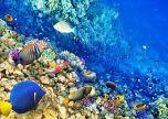 Animal underwater sealife