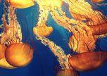 Jellyfish deep ocean deep sea
