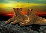 Lions Art birds