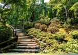 Botanical Gardens Wooden Steps Stairs