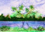 Tree along the lake purple birds