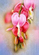 Bleeding hearts flower