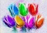 Tulips multi colours flower