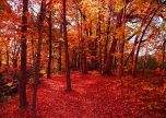 Autumn forest full of foliage wisconsin