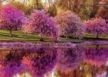 Blossomed spring trees along the river
