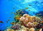 Seascape underwater