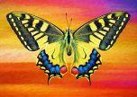 Butterfly art animals