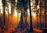 Forest magical trees