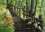 Woodland Stairs trees