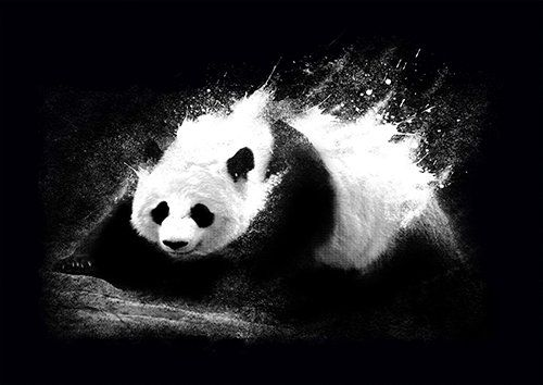 Milky panda lou - From £17.50 | Metal Plate Pictures
