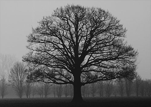 Fog and the lonely tree, Black colour - From £17.50 | Metal Plate Pictures