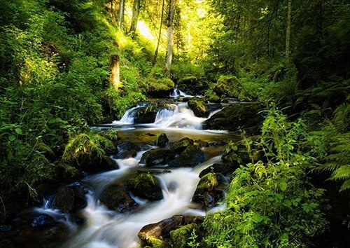 Cascading stream in the woods, Black colour - From £20.50 | Metal Plate Pictures