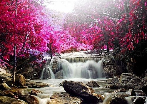 Red trees rocks nature natural waterfall, Black colour - From £17.50 | Metal Plate Pictures