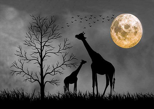 Giraffes moon silhouette landscape, Black colour - From £17.50 | Metal Plate Pictures