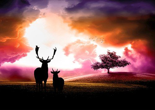 Sunset deer trees silhouette landscape, Black colour - From £17.50 | Metal Plate Pictures