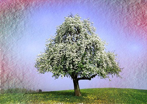 Springtime tree wat, Black colour - From £17.50 | Metal Plate Pictures