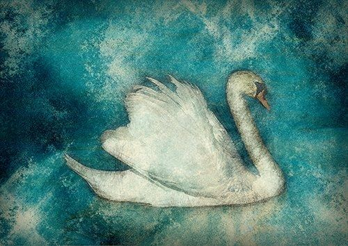 Swan on the lake wat, Black colour - From £17.50 | Metal Plate Pictures