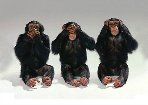 Animal 3 wise monkeys, Black colour - From £17.50   Metal Plate Pictures