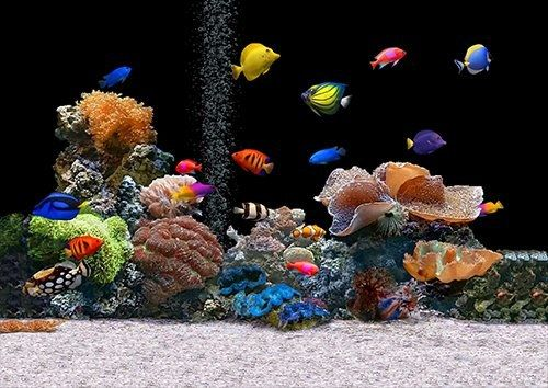 Animal fish tanked, Black colour - From £17.50 | Metal Plate Pictures