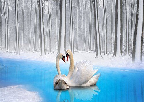 Animals swans on the lake in the snow, Black colour - From £17.50 | Metal Plate Pictures
