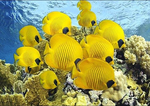 Animal yellow marine fish, Black colour - From £17.50 | Metal Plate Pictures