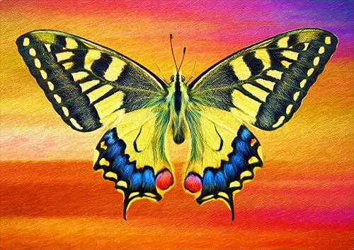 Butterfly art, Black colour - From £17.50 | Metal Plate Pictures