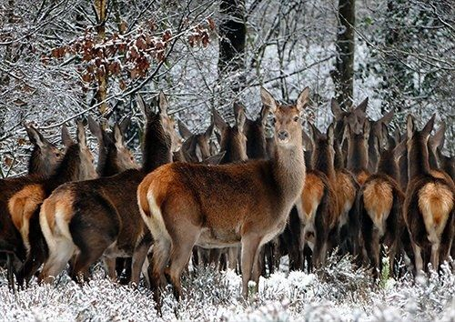 Deer in a pack, Black colour - From £17.50 | Metal Plate Pictures