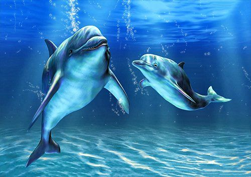 Dolphins Cute, Black colour - From £17.50 | Metal Plate Pictures