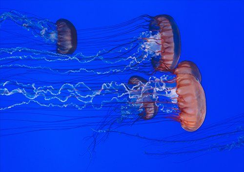 Jellyfish ocean, Black colour - From £17.50 | Metal Plate Pictures