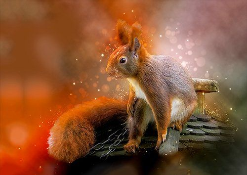 Squirrel art, Black colour - From £17.50   Metal Plate Pictures