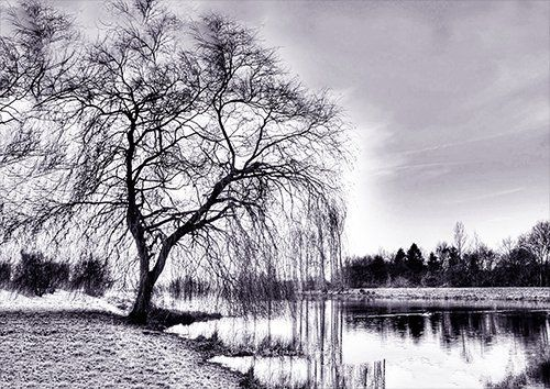 Tree by the lake black and white, Black colour - From £17.50 | Metal Plate Pictures