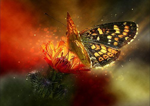 Hawk butterfly art, Black colour - From £17.50 | Metal Plate Pictures