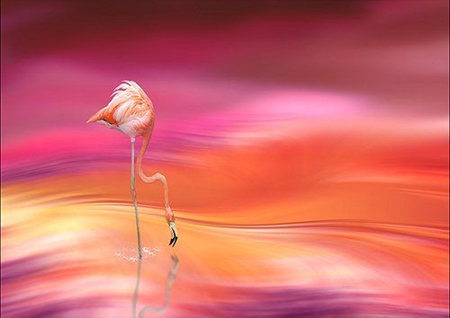 Pink flamingo blurred art, Black colour - From £17.50 | Metal Plate Pictures