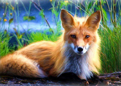 Red fox painting, Black colour - From £17.50 | Metal Plate Pictures