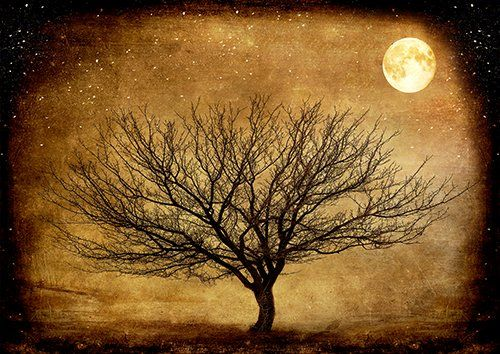 The Midnight tree art, Black colour - From £17.50 | Metal Plate Pictures