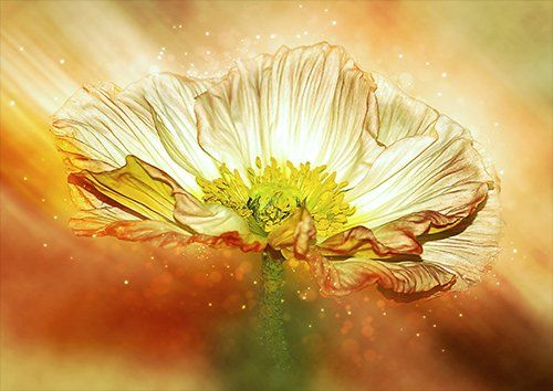 Anemone yellow flower, Black colour - From £17.50 | Metal Plate Pictures