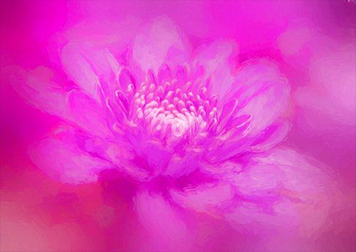 Art purple flower, Black colour - From £17.50   Metal Plate Pictures